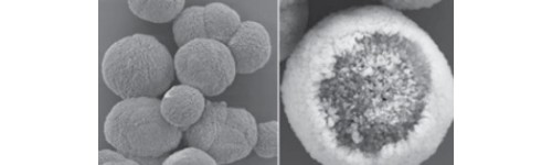 Calcium Carbonate Microparticles